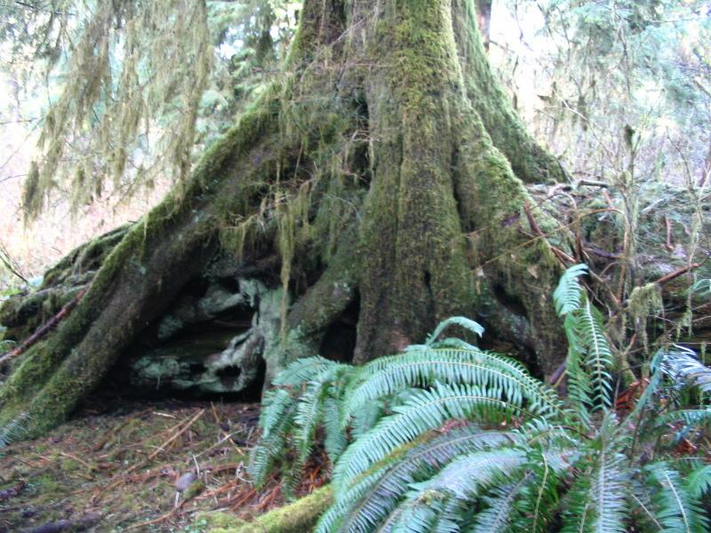 stilt-tree